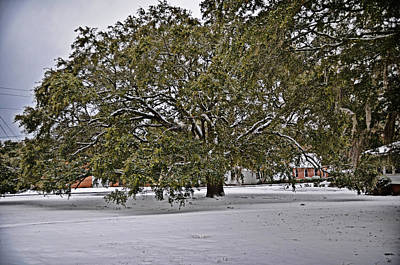 Photograph - Live Oak In Snow by Linda Brown