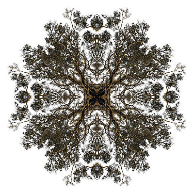 Live Oak Lace Art Print by Debra and Dave Vanderlaan
