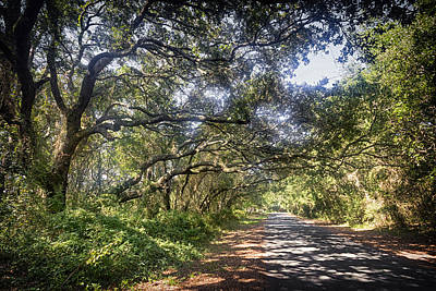 Photograph - Live Oak Lattice by Alan Raasch