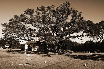 Photograph - Live Oak Outer Banks by Greg Kluempers