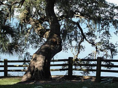 Digital Art - Live Oak Over Tampa Bay by IM Spadecaller