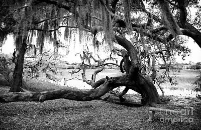 Photograph - Live Oak Seat by John Rizzuto