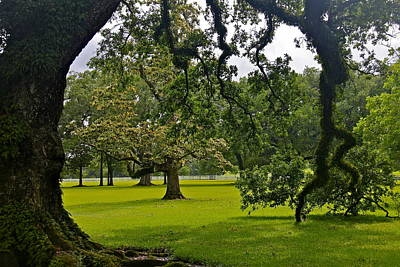 Photograph - Live Oak Tree At Oak Alley Plantation by Denise Mazzocco