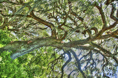 Photograph - Live Oak Tree Dance by Dale Powell
