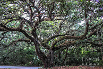 Green Cemetery Road Photograph - Live Oak Tree by Scott Moore