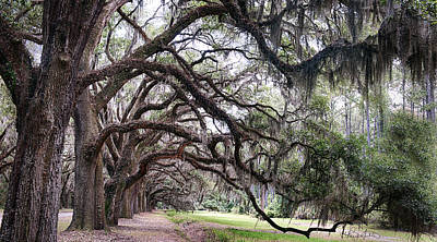 Photograph - Live Oak Tunnel by Renee Sullivan