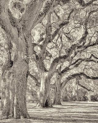 Live Oaks-1 Art Print by Bill LITTELL
