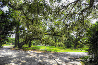Photograph - Live Oaks Dripping With Spanish Moss by Dale Powell