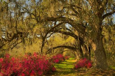 Photograph - Live Oaks by JHR photo ART