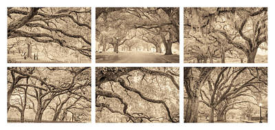 Photograph - Live Oaks Of New Orleans by Scott Rackers