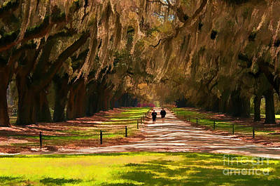 Photograph - Live Oaks by Sharon Seaward