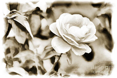 Painting - Live Yellow Rose Flower Painting In Sepia 3229.01 by M K Miller