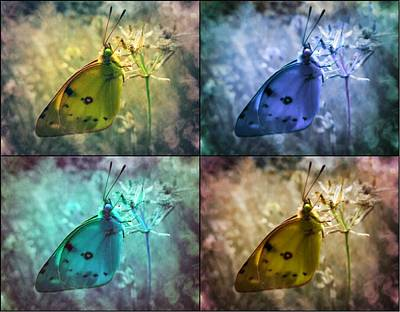 Abstract Expressionist Photograph - Lives Of A Butterfly by Marianna Mills