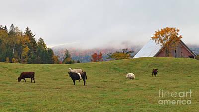 Livestock Photograph - Livestock Assortment by Charles Kozierok