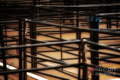 Livestock Market - In The Peak District In Great Britain Art Print