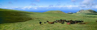 Livestock - Mixed Breeds Of Black Art Print