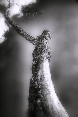 Photograph - Living Dead Tree - Spooky - Eerie by Jason Politte