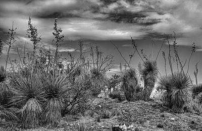Photograph - Living Desert by Robert Meyers-Lussier