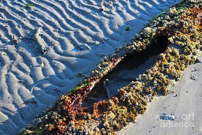 Assateague Island Photograph - Living Driftwood by Kathleen Garman