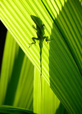 Photograph - Lizard And Shadow Vertical by David Lee Thompson
