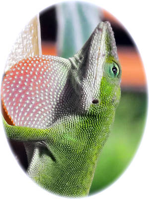 Photograph - Lizard 1 by Dawn Eshelman