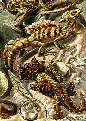 Lizard Detail II Art Print by Unknown