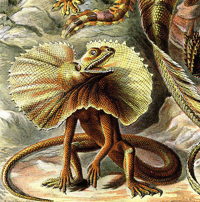 Lizard Detail IIi Print by Unknown