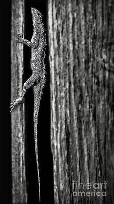 Photograph - Lizard In Barn Board by Walt Foegelle
