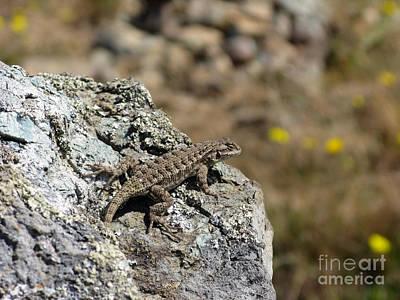 Photograph - Lizard In California Mount Tam Area by Ausra Huntington nee Paulauskaite