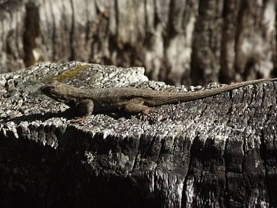 Lizard In Thought Art Print by James Rishel