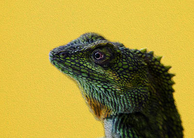 Photograph - Lizard by Karen Walzer