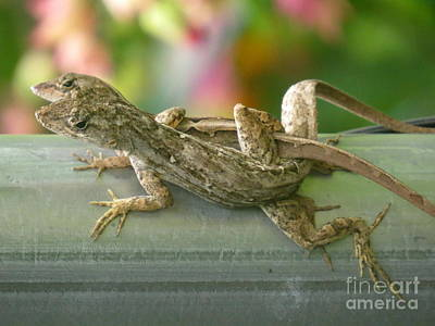 Brown Anole Photograph - Lizard Love by Zina Stromberg