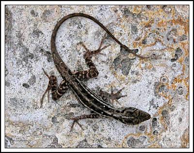 Photograph - Lizard by Mariarosa Rockefeller