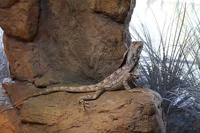 Lizard Photograph - Lizard - National Aquarium In Baltimore Md - 12121 by DC Photographer