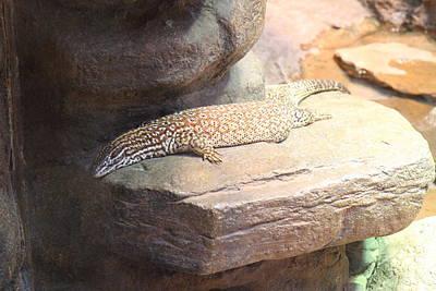 Lizard - National Aquarium In Baltimore Md - 12123 Art Print by DC Photographer