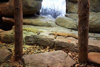 Lizard - National Aquarium In Baltimore Md - 12124 Art Print