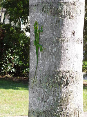 Photograph - Lizard On A Palm by Ron Davidson