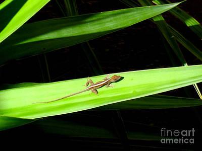 Photograph - Lizard On Leaf by Oksana Semenchenko