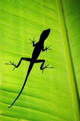 Lizard On Leaf, Sarapiqui, Costa Rica Art Print by Panoramic Images