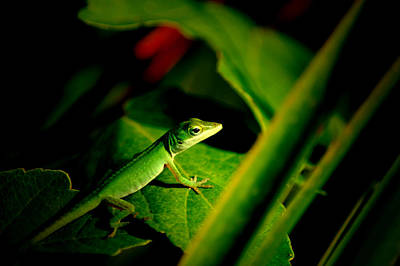 Photograph - Lizard Portrait 2 by David Weeks
