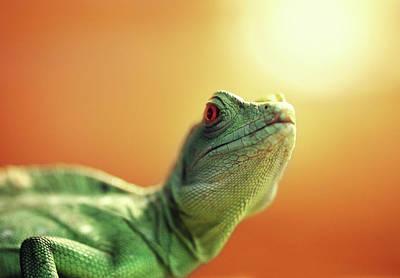 Photograph - Lizard by Savushkin