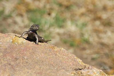Photograph - Lizard Sunbathing by Diana Haronis