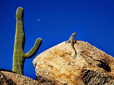 Thorn Tail Photograph - Lizard Sunning On Rock With Saguaro by Lane Erickson