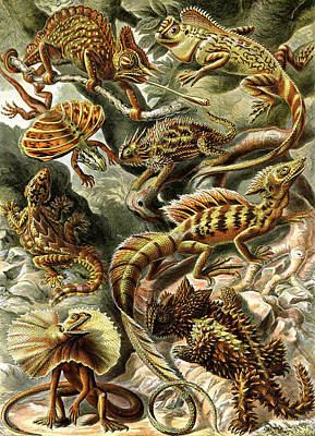 Lizards Lizards And More Lizards Art Print by Unknown