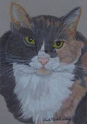 Drawing - Lizzy-tortoiseshell Cat Commission by Anita Putman