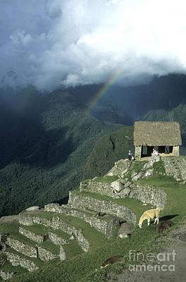 Terracing Photograph - Llama And Rainbow At Machu Picchu by James Brunker