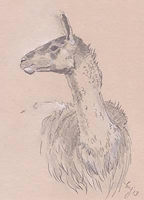 Llama Drawing Original by Mike Jory