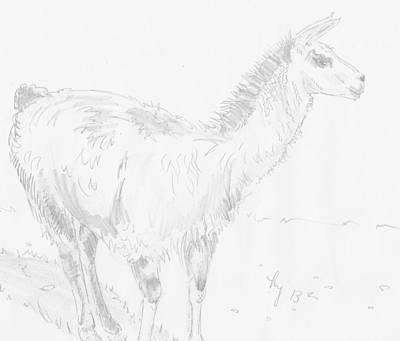 Llama Drawing - Llama by Mike Jory