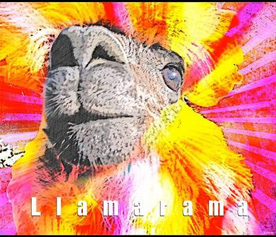 Lama Photograph - Llamarama by WDM Gallery