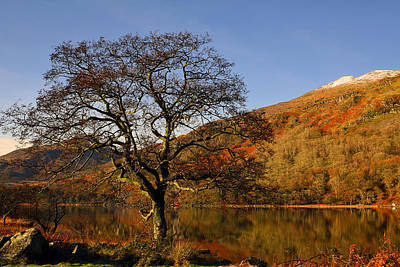 Snowdonia Photograph - Llyn Gwynant The Tree by Regie Marshall